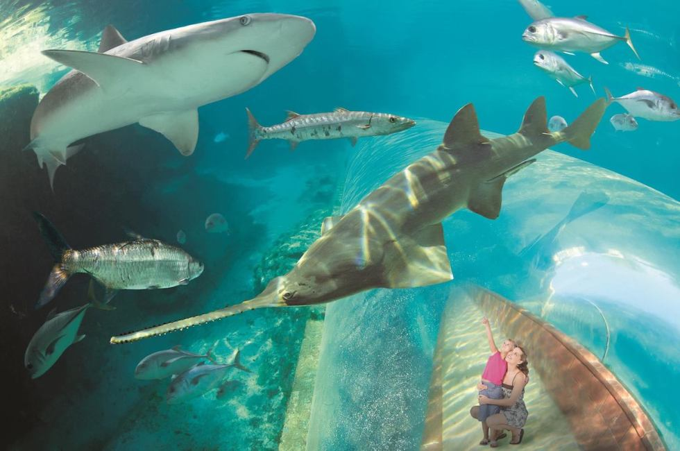 Family members enjoying the rich marine habitat at Atlantis Paradise Island Bahamas.