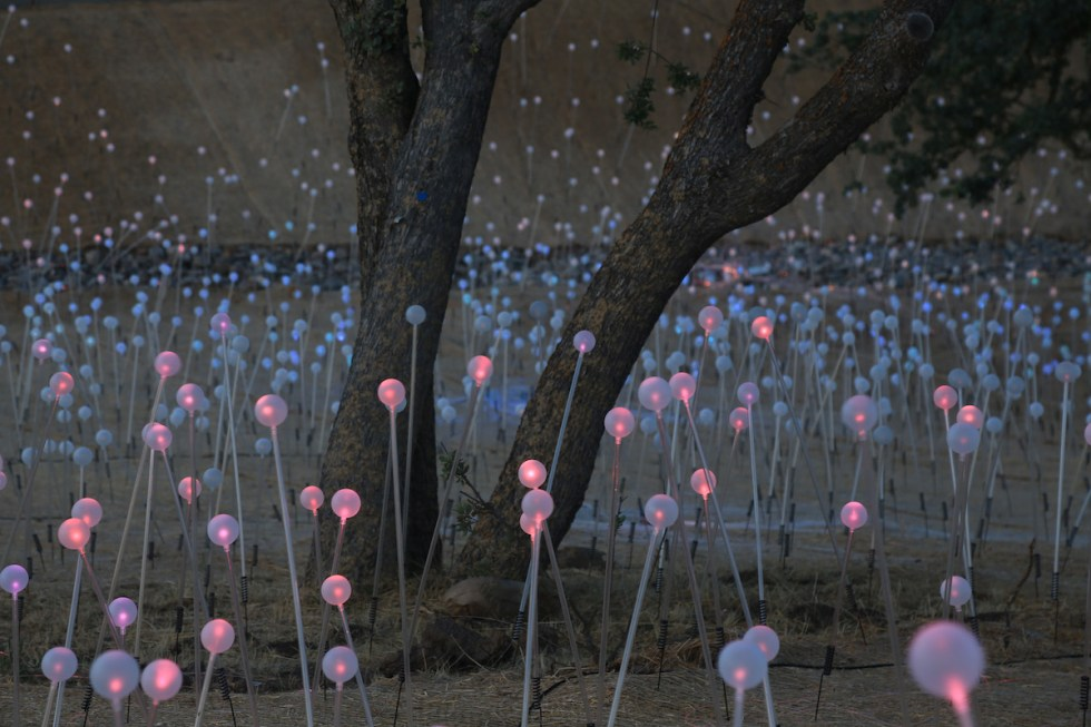 Field of Light installation created by Bruce Munro at Sensorio in Paso Robles, California.