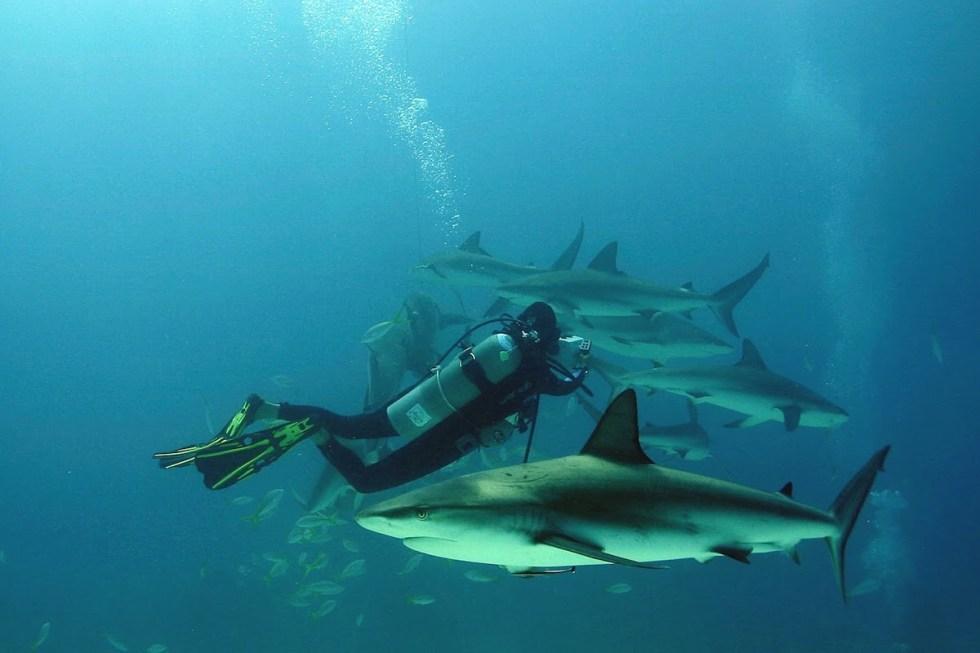 Shark scuba diving spot in Small Hope Bay, The Bahamas