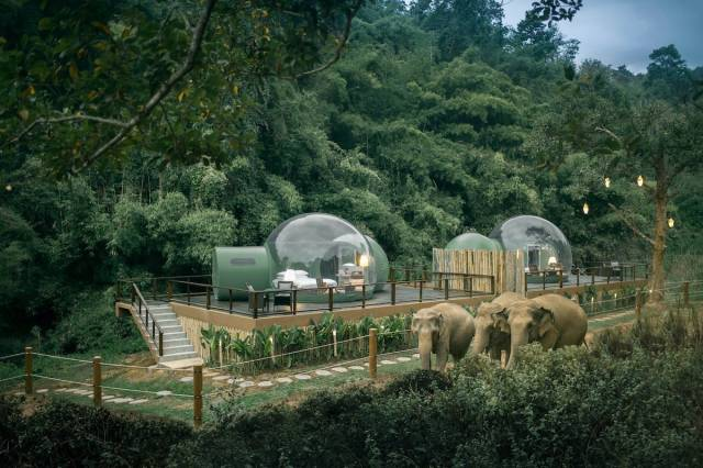 "Two transparent luxury bubble suites, called ""Jungle Bubbles,"" offering uninterrupted views of majestic elephants in their natural habitat, perched on a wooden deck above the forest"
