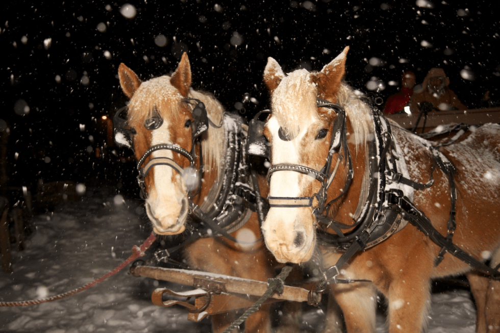 2020/12/horse-drawn-sleigh-ride.png?fit=1200,800&ssl=1