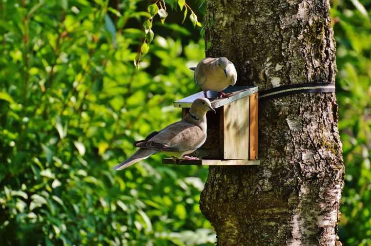 brown and beige short beak claw foot bird on bird house