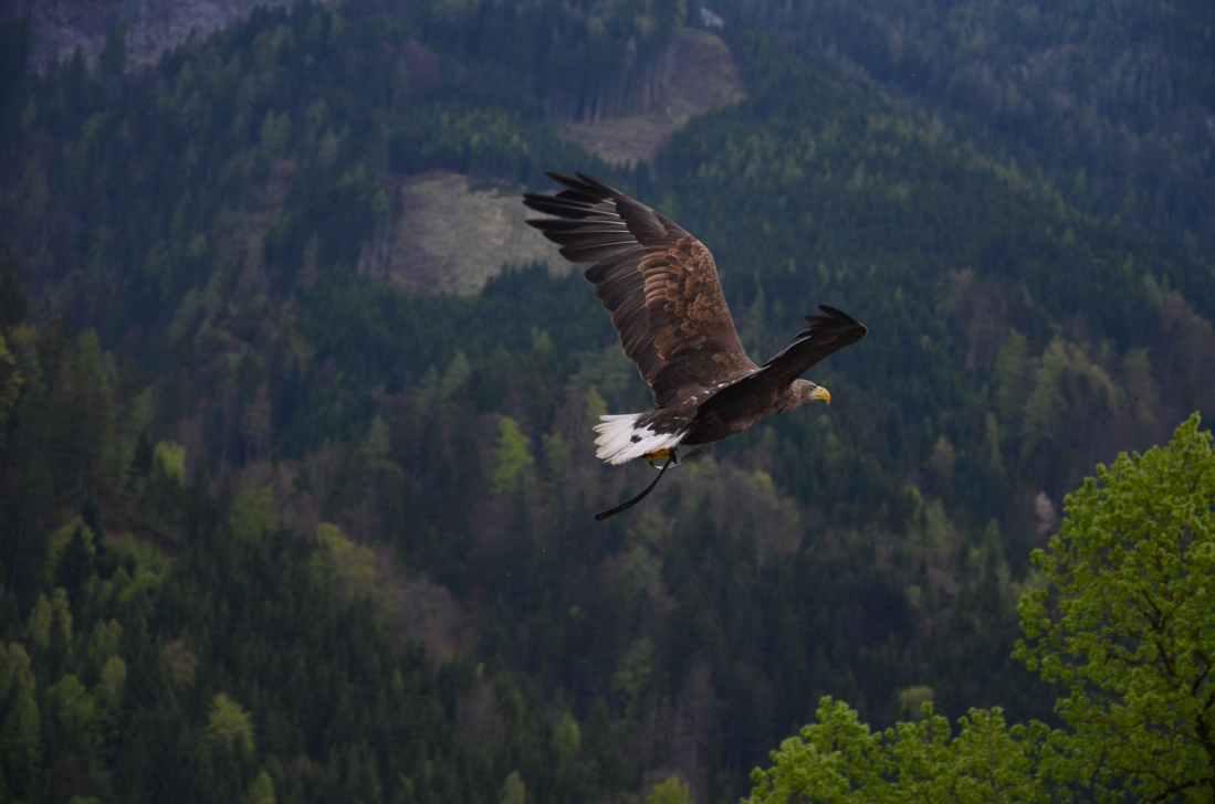 poem, poetry, flight, eagle, courage, strength, weak, God, power, author