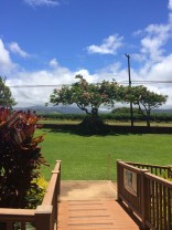 From the free tasting area make a left onto the deck to see this lovely tree.