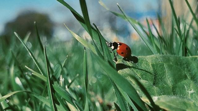 photo of ladybug on blade of grass