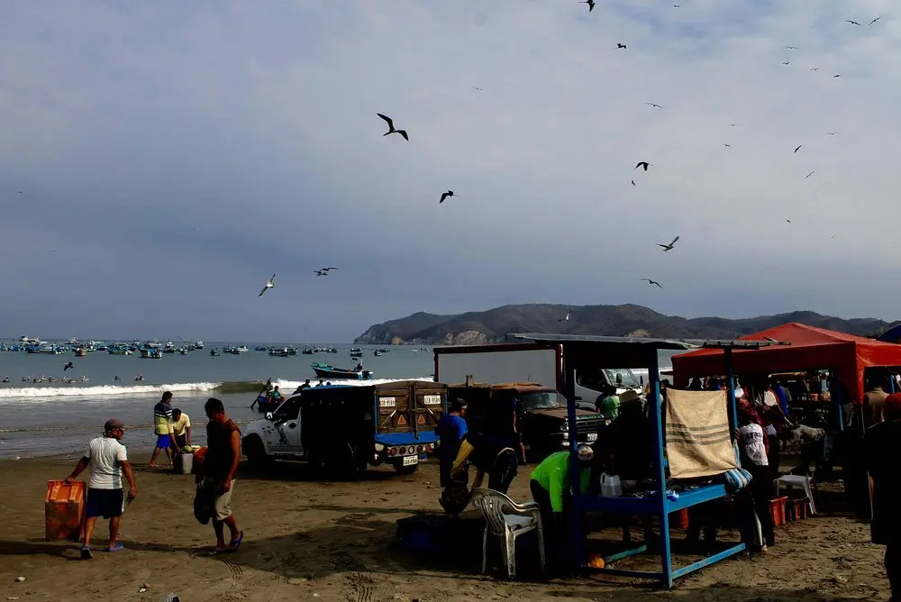 The bustling fish market at Puerto Lopez