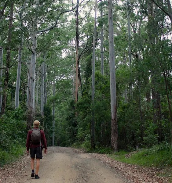 Bushwalking is definitely one of the best things to do in Warwick and the Southern Downs