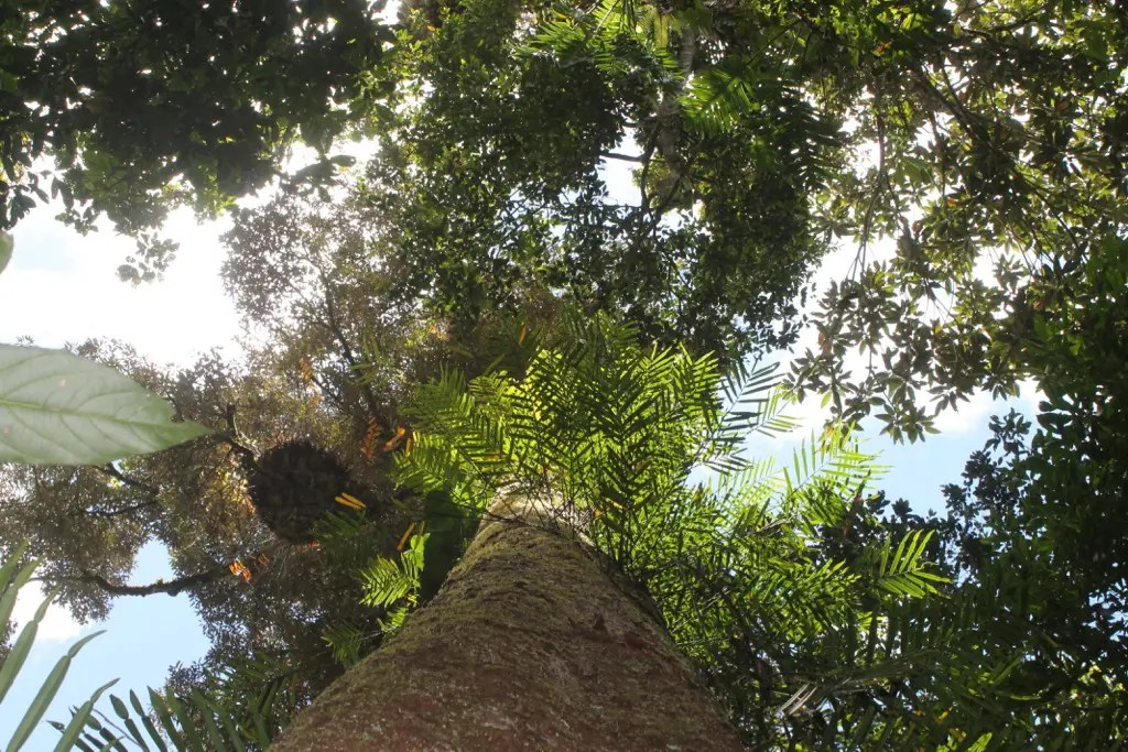 A photo of the rainforest canopy in Atherton. Exploring the incredible national parks is one of the best things to do in Atherton tablelands