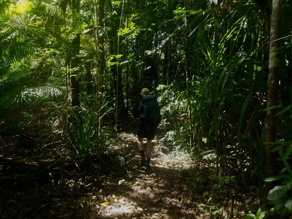Beware of insects while hiking Thorsborne Trail Hinchinbrook Island and take repellant