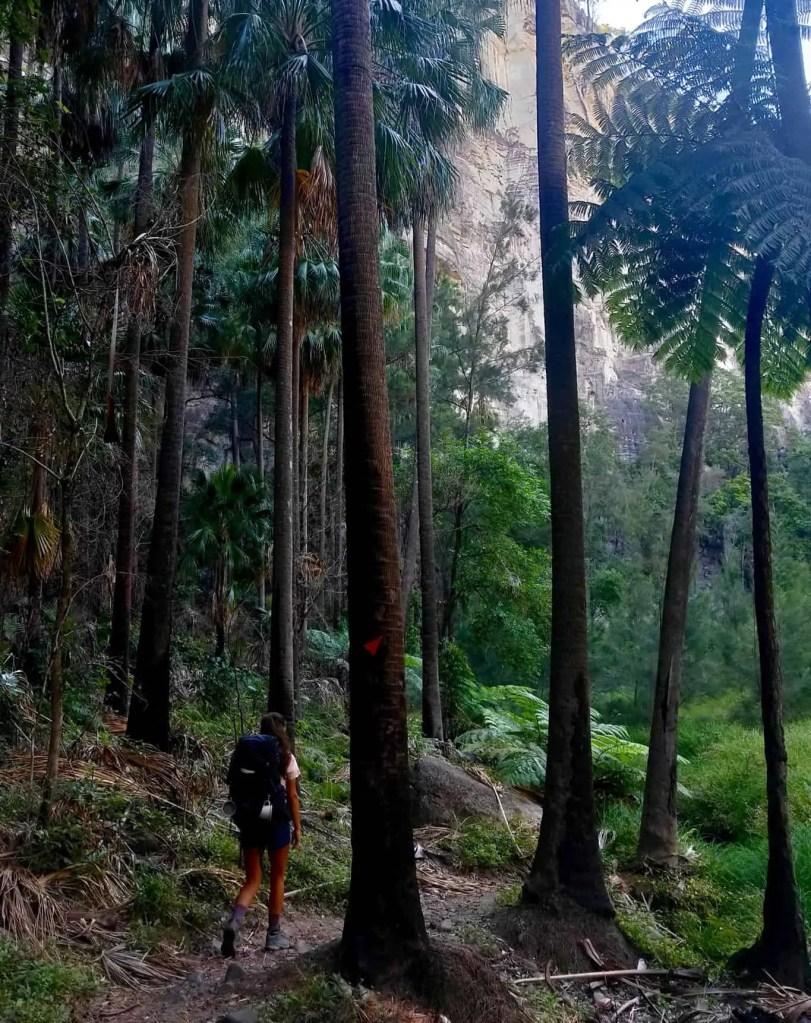Walking in Carnarvon Gorge to Big Bend Carnarvon Gorge