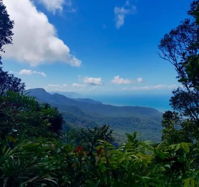 The view of Cape Tribulation through the rainforest foilage
