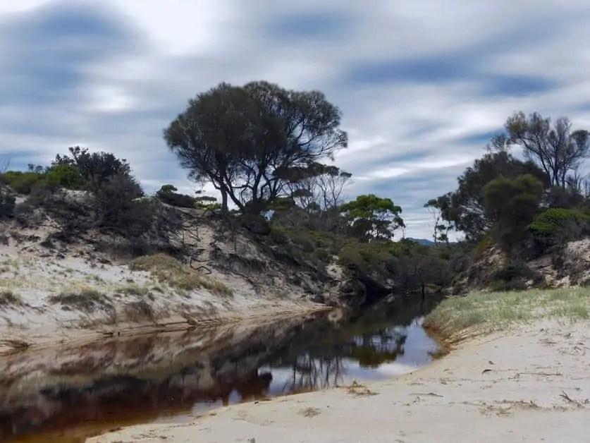 A brackish tidal creek behind Cooks Beach on the Freycinet Peninsula Circuit