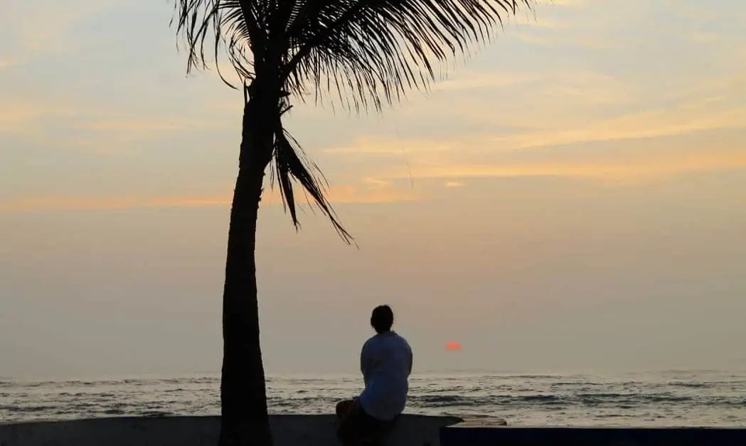 Girl under a palm tree watching the sunset