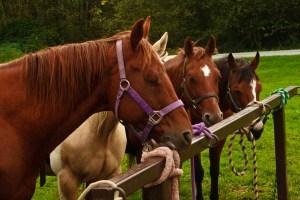 Horses langley 2