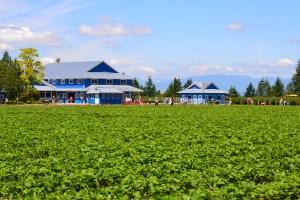 krause berry farm