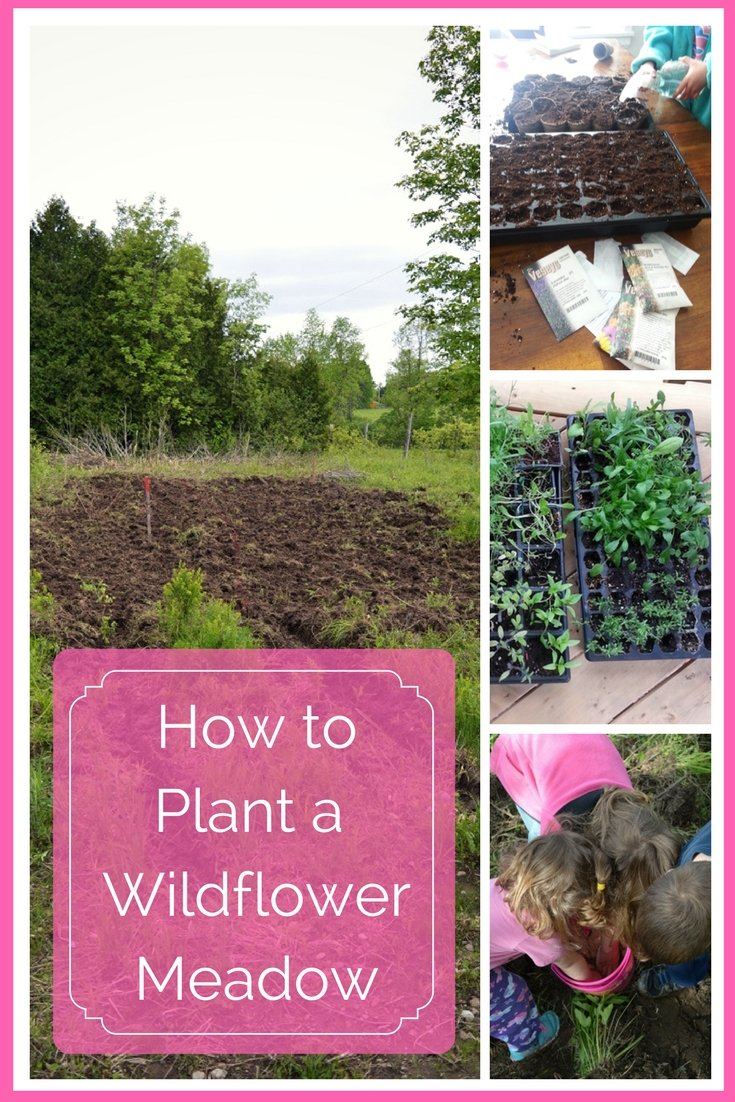How to plant a wildflower meadow from seed