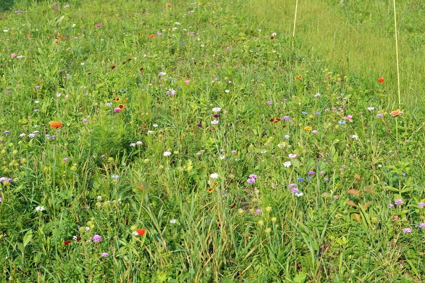 Growing a wildflower meadow - first year