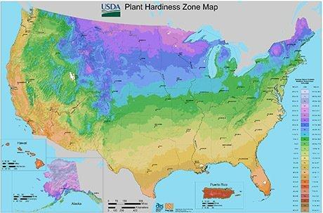 USA hardiness zone