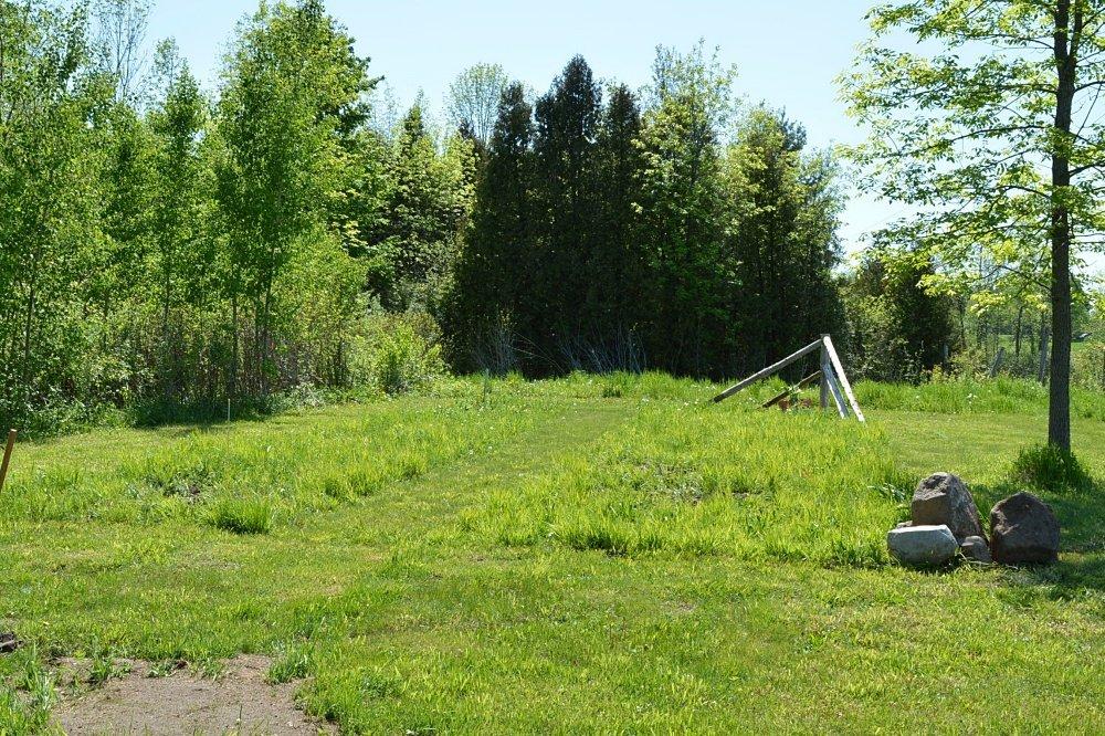 planting a wildflower meadow