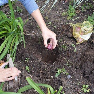tips for planting fall bulbs