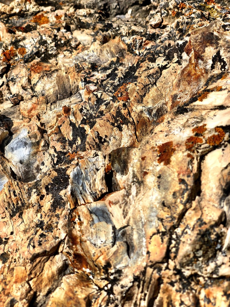Crystalized petrified logs on the petrified forest loop trail