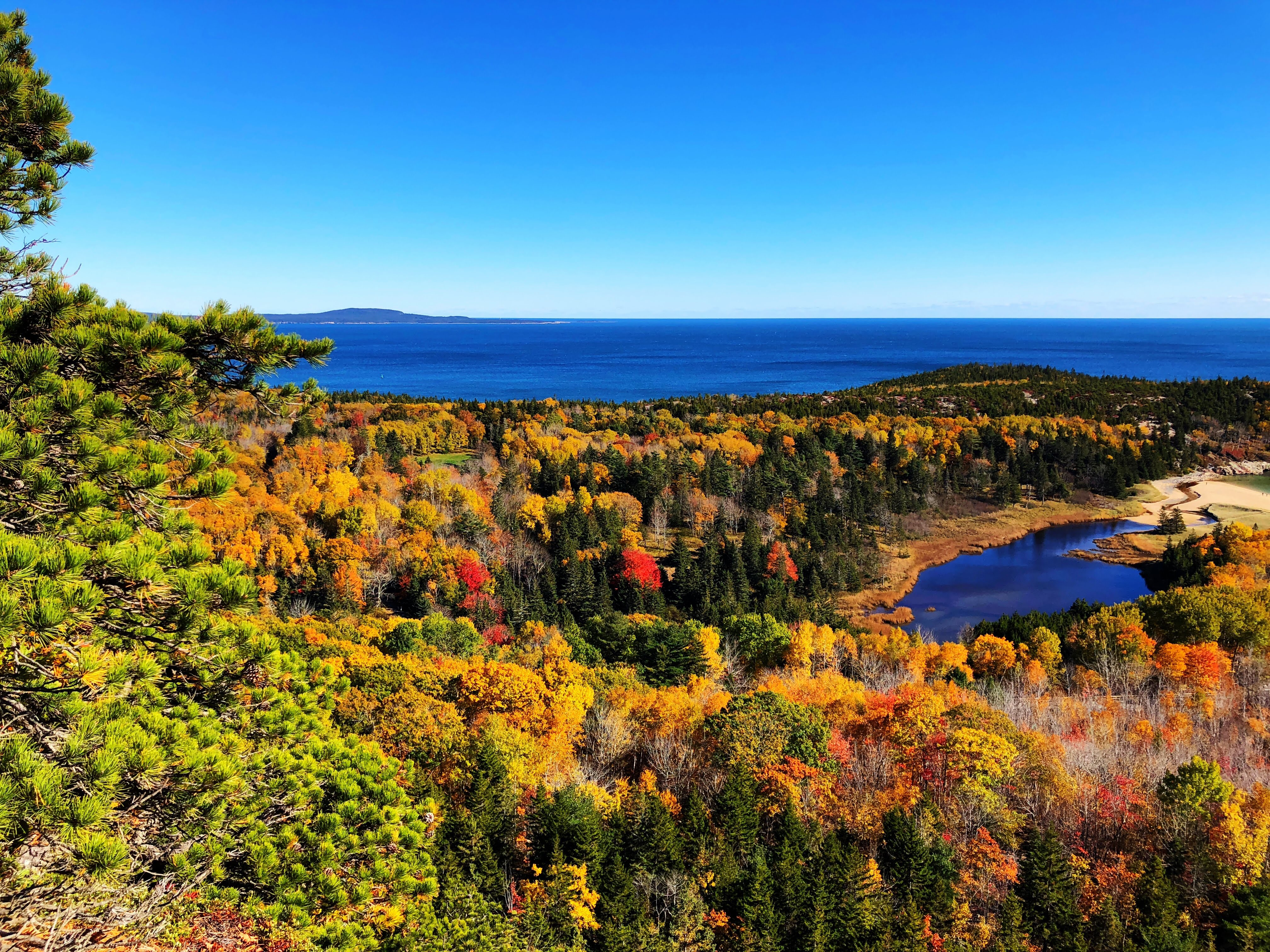 Fall Leaves in Acadia NP