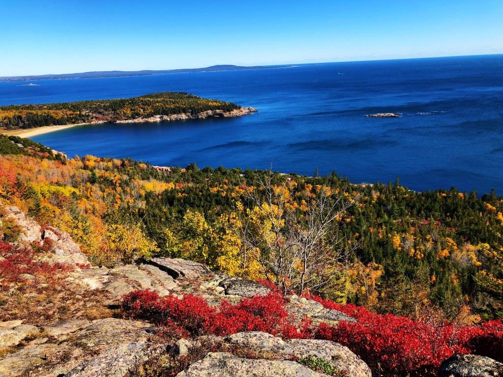 Leaves and ocean in Acadia National Park