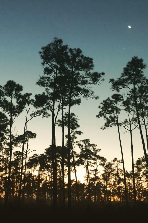 Night sky in Everglades National park