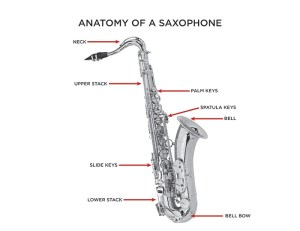 Saxophone Buying Guide | The Vault at Music & Arts