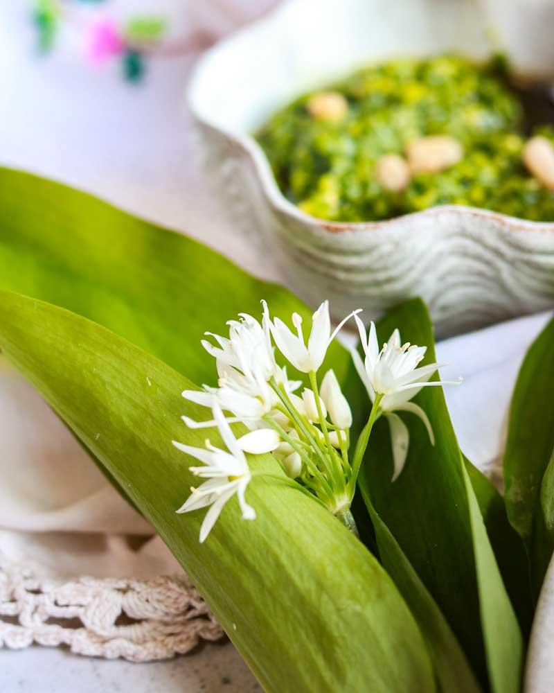 Wild Garlic in front of pesto