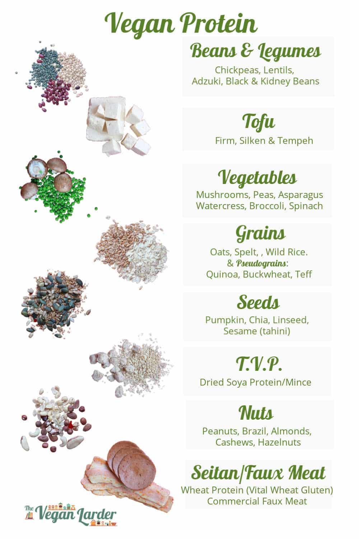 Vegan Protein info graphic