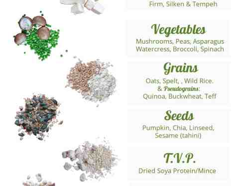Vegan Protein info graphic