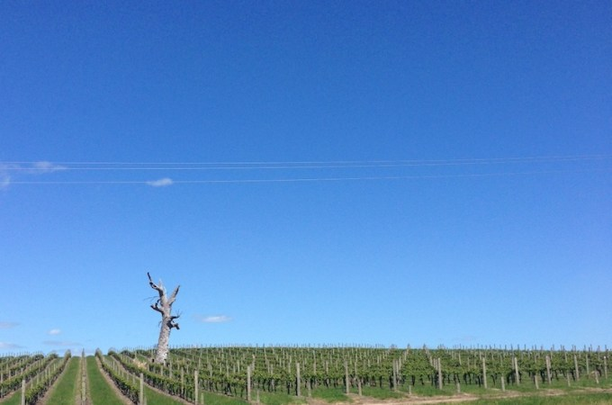 I Went to Balgownie Estate Vineyard and I Bought You a Present {ended}