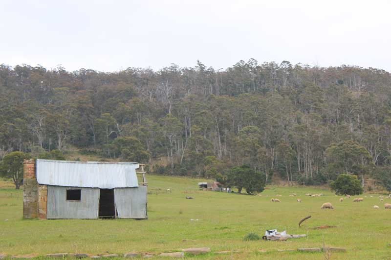 Tasmania-road-trip