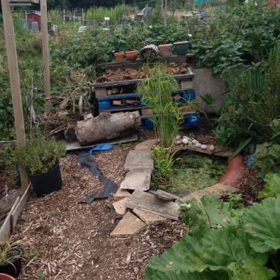 Our nature area which has attracted a lot of interest from insects animals and other allotment holders.