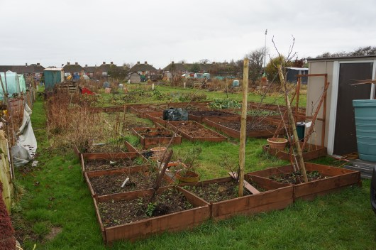 A look across the allotment on the first day of the new year.