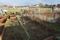 another view of the cleared raspberry patch