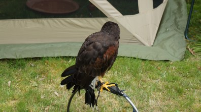 Another bird of prey