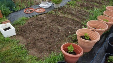 Leeks planted and puddled in