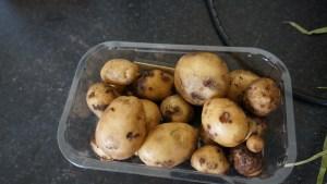 Homeguard potatoes
