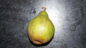 A pear harvested this week.