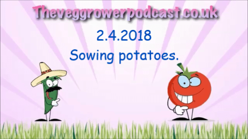 Join me in this weeks video from the veg grower podcast where I am sowing my potatoes.