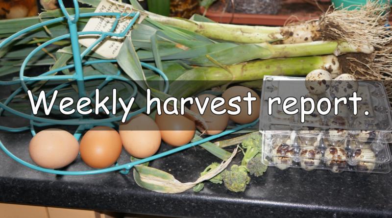 Weekly harvest report.
