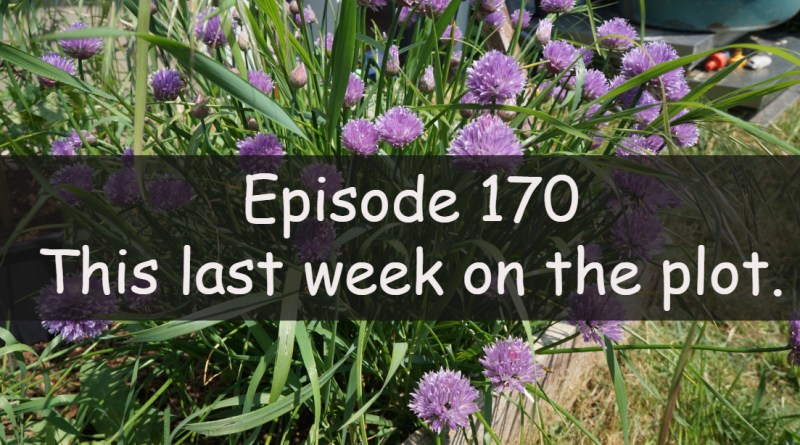 Join me for this week's podcast from the veg grower podcast. This week I am discussing this last week on the plots.