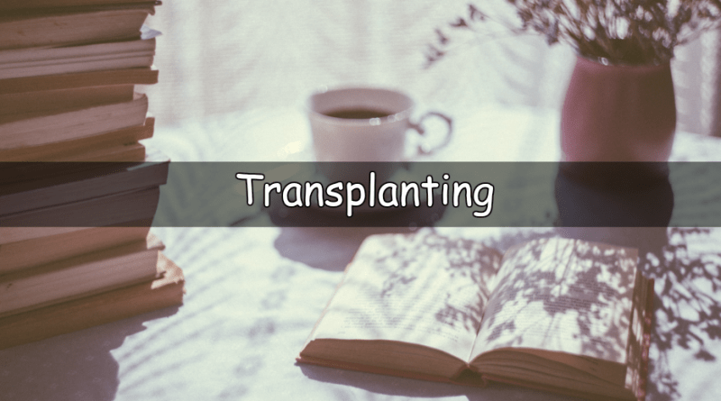 It's Wednesday which means its time to look at my understanding of a horticultural word or term. This week I am looking at the word transplanting.