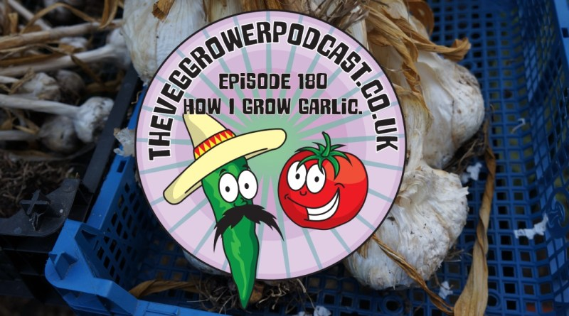 In this podcast I share how I grow garlic. I also share the latest on the allotment and vegetable patch.