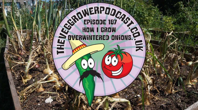 Join me in this weeks veg growing podcast where I will be discussing how I grow over-wintered onions. I also share the latest on the plots.