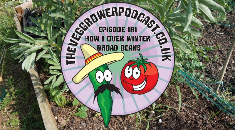 Join me in this podcast where I discuss how I over winter broad beans. I also share the latest on the allotment and vegetable patch.