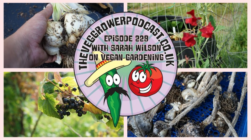 Join me in this week's podcast where I am joined by my friend and fellow podcast Sarah Wilson from roots and all podcast. Join me as I try to find out more about vegan gardening and why it isn't as easy as it might sound. We also have the latest from my plots.