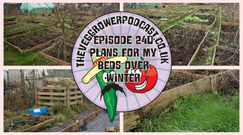 Join me in this week's podcast where I share my plans for my beds over winter. I also share the latest from the plots.